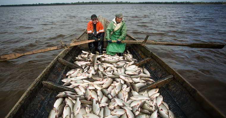 промышленная добыча рыбы ЯНАО