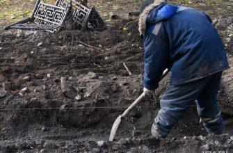 Николай кузнецов могила подкоп осквернили львов